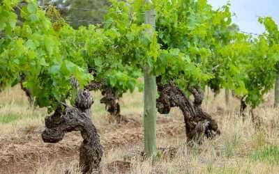 Things to do in the Barossa Valley that Aren't Wine Tasting