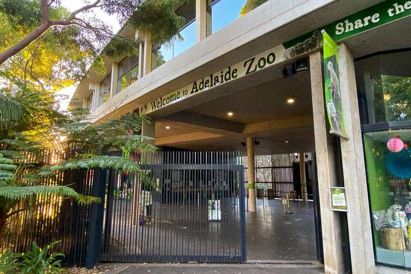 Adelaide Zoo After Dark Review